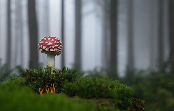 Picture forest, mushroom, mushroom