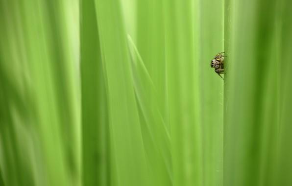 Picture greens, grass, spider, spider, grass, greenery