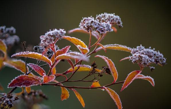 Picture plant, frozen, frost
