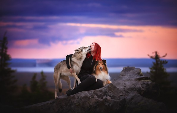 Picture dogs, girl, nature