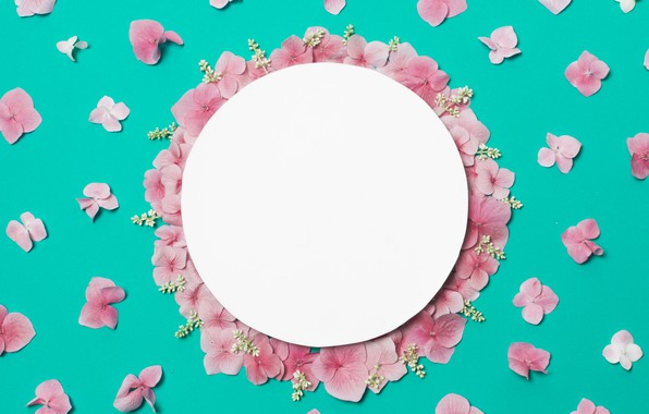Picture flowers, background, petals, pink, pink, flowers, background, petals, frame, floral
