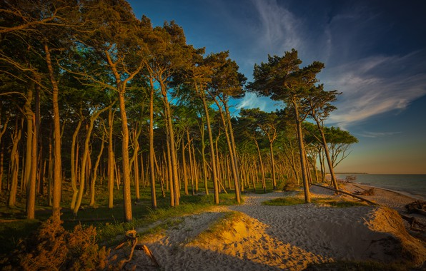 Picture sand, forest, beach, the sky, clouds, light, trees, branches, nature, lake, river, blue, trunks, shore, …