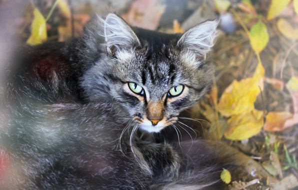 Picture cat, leaves, background