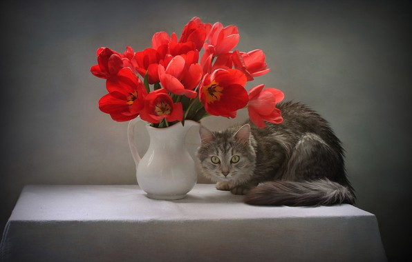 Picture cat, cat, look, flowers, pose, table, animal, tulips, pitcher, tablecloth, Kovaleva Svetlana, Svetlana Kovaleva