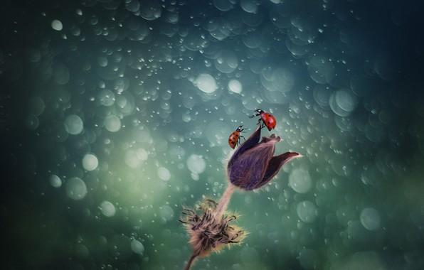 Picture flower, ladybug, flower, bokeh, bokeh, ladybug