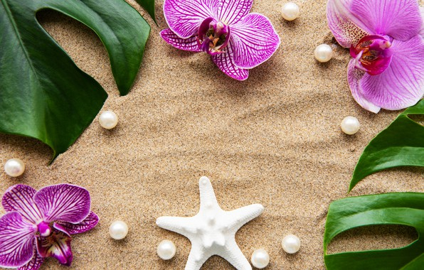 Picture sand, leaves, flowers, white, Orchid, pink, flowers, sand, orchid, pearls, spa, starfish, zen, perls