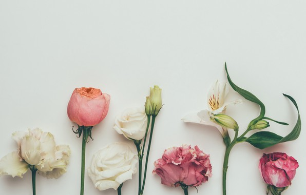 Picture flowers, background, roses, colorful, white, vintage, pink, flowers, background, roses, clove