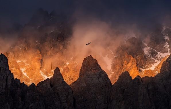 Picture light, mountains, fog, bird