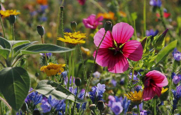 Picture summer, flowers, meadow, what, sorry, goes