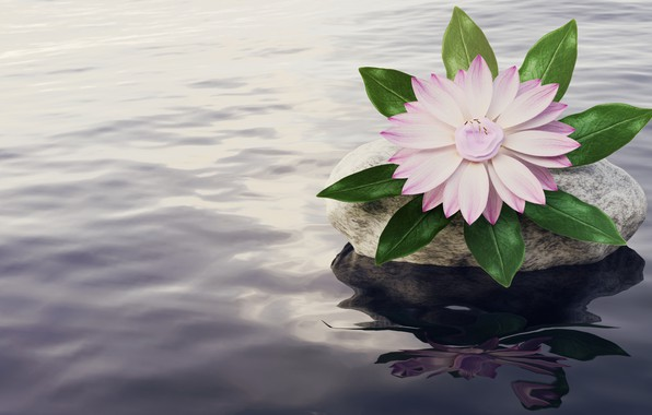 Picture flower, water, rendering, pink, stone, pond, computer graphics, Nymphaeum, water Lily