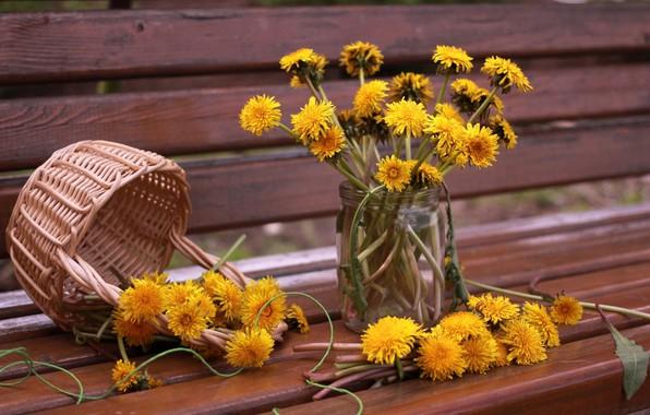Picture flowers, dandelions, vase