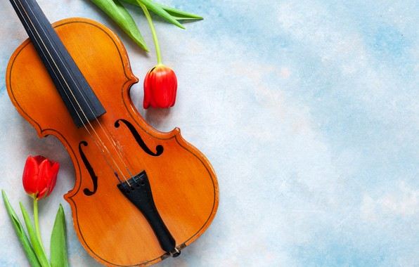 Picture flowers, music, violin, tulips