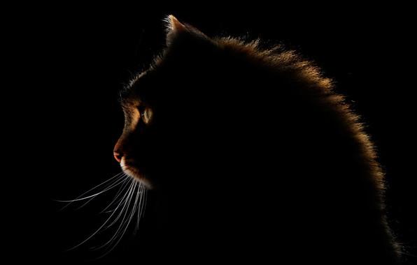 Picture eyes, cat, mustache, glow, eyes, cat, glow, mustache, Antonio Grambone