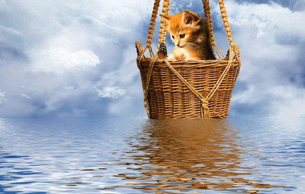 Picture kitty, butterfly, the ripples on the water, basket, the sky sheep