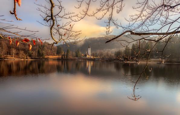 Picture landscape, branches, bridge, nature, lake, Church, island, forest, Slovenia, Bohinj, Gordeev Edward, Eduard Gordeev, Ed …