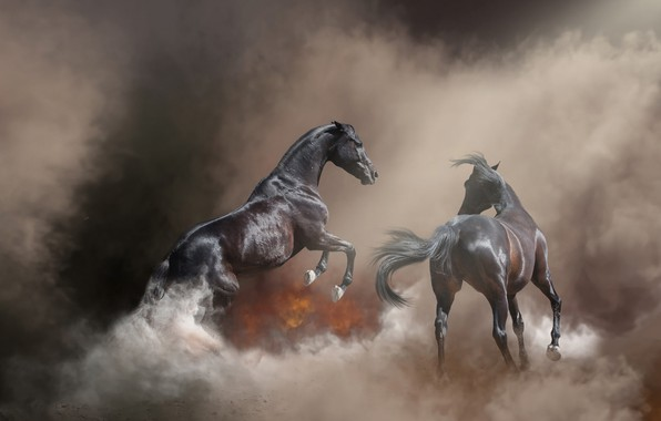 Picture nature, pose, fog, background, fire, fire, horse, horse, smoke, stallion, horses, treatment, horse, pair, couples, ...
