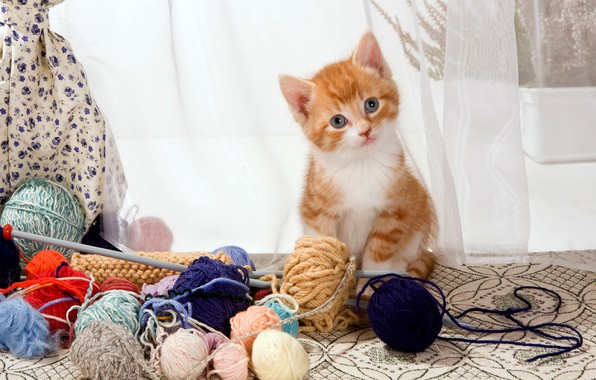 Picture cat, look, tangle, pose, kitty, table, wool, small, baby, window, red, curtains, kitty, curtains, thread, …
