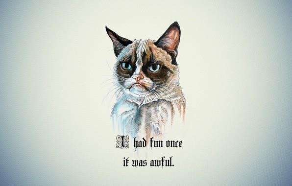Picture cat, background, portrait