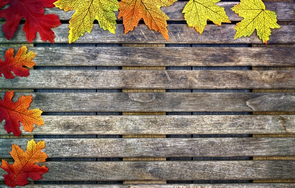 Picture autumn, leaves, background, tree, colorful, maple, wood, background, autumn, leaves, autumn, maple