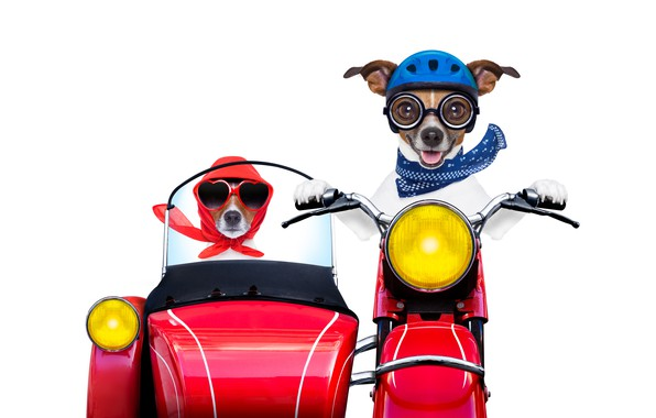 Picture glass, red, bikers, lights, photoshop, humor, scarf, glasses, motorcycle, stroller, white background, helmet, driving, two, …