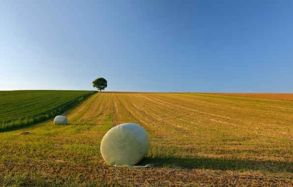 Picture field, the sky, hay