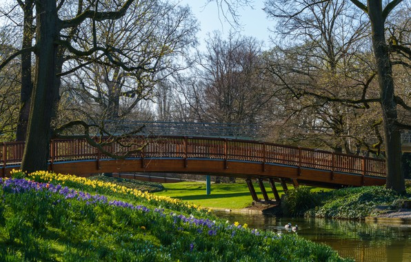 Picture the sun, trees, flowers, bridge, pond, Park, duck, spring, Germany, Karlsruhe