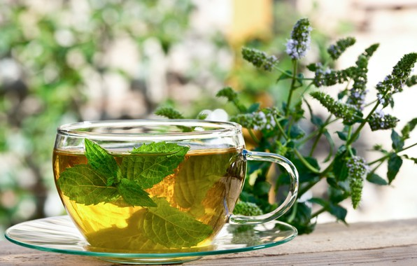 Wallpaper Cup Mint Infusion Herbal Tea Images For Desktop Section Eda Download