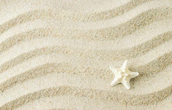Picture sand, background, starfish, beach, texture, background, sand, marine, starfish