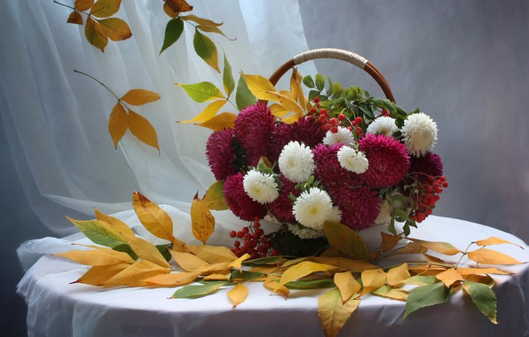 Picture autumn, leaves, Rowan, asters