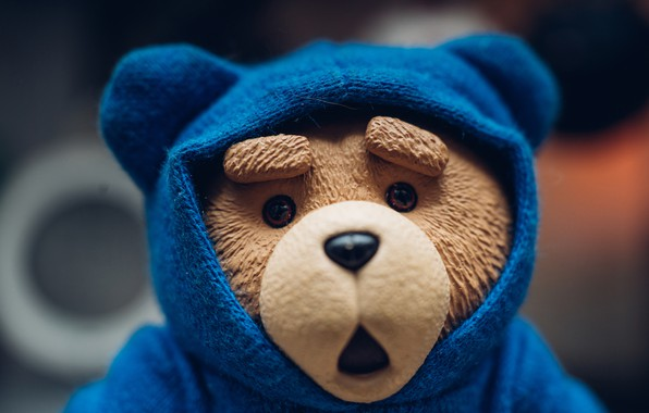 Picture toy, bear, hood, bear