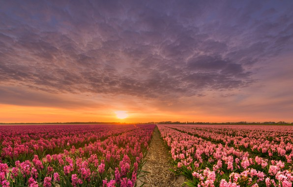 Picture field, the sky, the sun, clouds, light, sunset, flowers, beauty, the evening, horizon, space, straw, ...