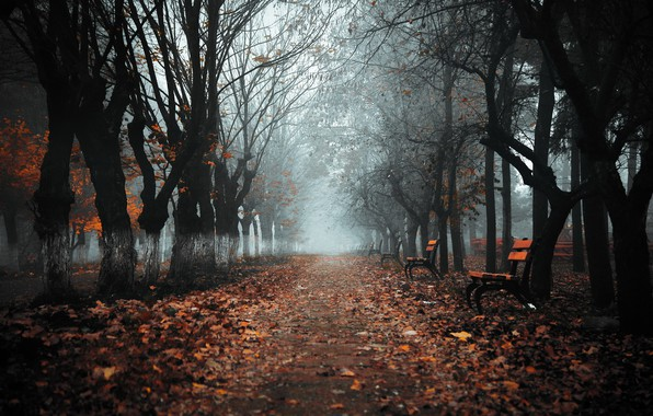 Picture autumn, the city, fog, Park, bench