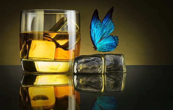 Picture ice, butterfly, glass, glass, ice, whiskey, whiskey, butterfly, Jackson Carvalho