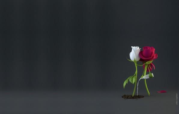 Picture love, tenderness, rose, feelings, minimalism, pair, care, Nikita Veprikov, Sap, rendering