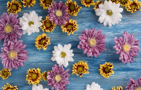Picture flowers, white, chrysanthemum, wood, pink, flowers