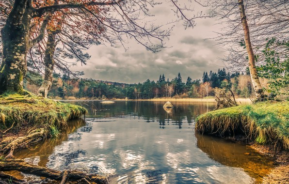 Picture forest, nature, lake, shore
