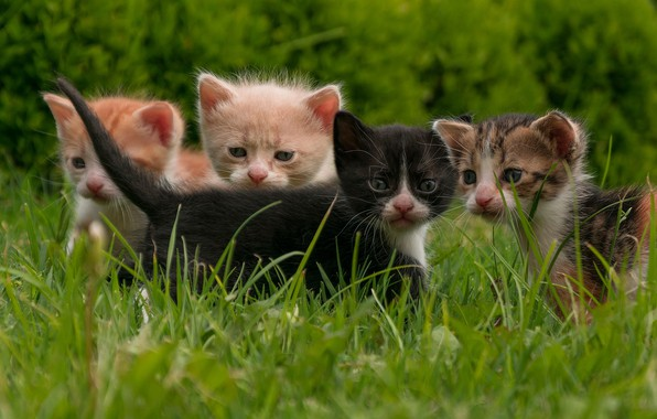 Picture grass, kittens, kids