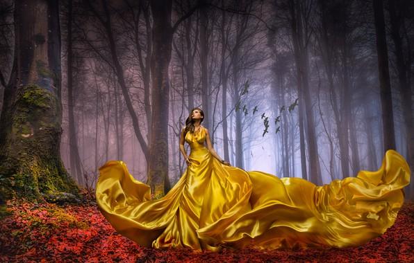 Picture autumn, forest, leaves, girl, trees, landscape, birds, nature, pose, fog, gold, mood, trunks, silk, dress, ...