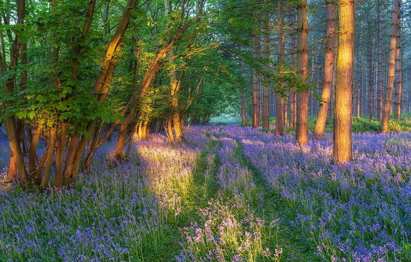 Picture Flowers, Spring, Forest, Glade