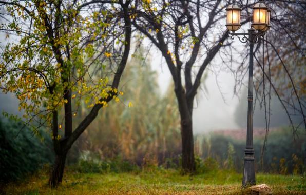 Picture trees, fog, Park, lights, bokeh
