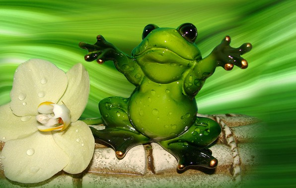 Picture frog, Orchid, the Wallpapers, author's photo by Elena Anikina