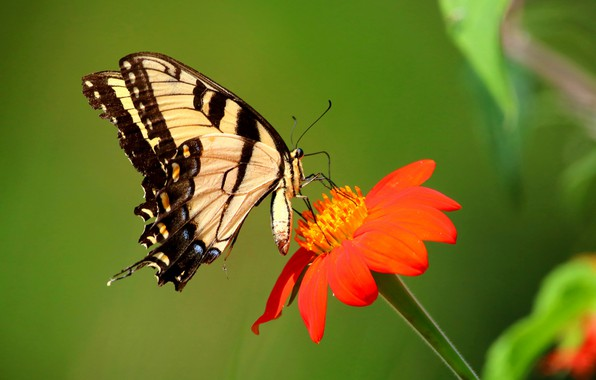 Picture flower, butterfly, butterfly