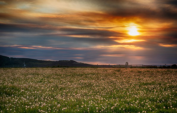 Picture field, the sky, grass, the sun, clouds, sunset, flowers, dandelions