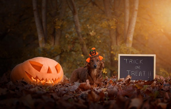 Picture autumn, look, leaves, light, trees, Park, letters, holiday, the inscription, foliage, dog, hat, pumpkin, Board, …