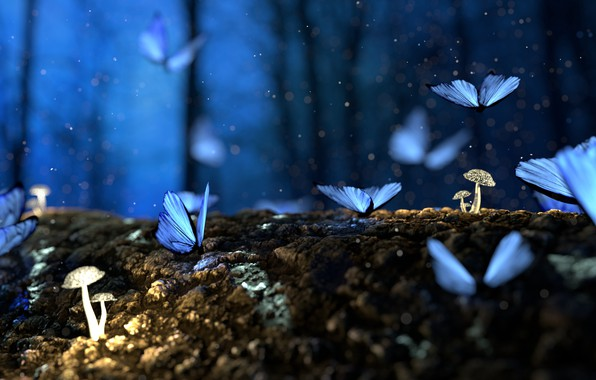 Picture Nature, Macro, Forest, Butterflies, Mushrooms
