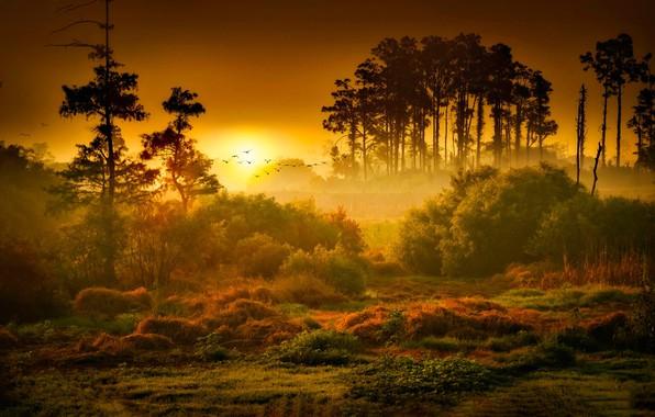 Picture Sunset, The sun, Nature, Sunrise, Fog, Trees, Forest, Dawn, Landscape, Nature, Grass, Landscape, Sun, Sunset, …