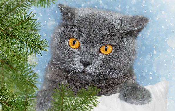 Picture cat, branches, background, spruce