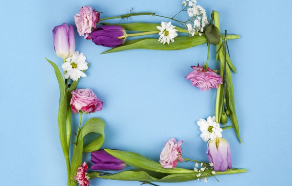Picture flowers, roses, purple, tulips, pink, pink, flowers, beautiful, blue background, tulips, spring, purple, roses