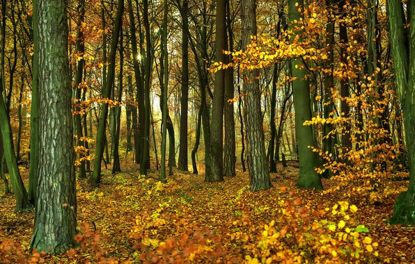 Picture autumn, forest, foliage, forest