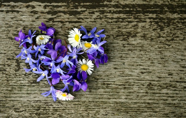 Picture flowers, background, heart